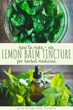 Lemon balm has many health benefits and one of the best ways to use it is in a tincture. Lemon balm is highly medicinal and can be used to relieve cold sores! Learn how to make this simple lemon balm tincture using fresh lemon balm from your garden! Cold Home Remedies, Natural Home Remedies, Natural Healing, Herbal Remedies, Health Remedies, Natural Oil, Natural Beauty, Healing Herbs, Holistic Healing