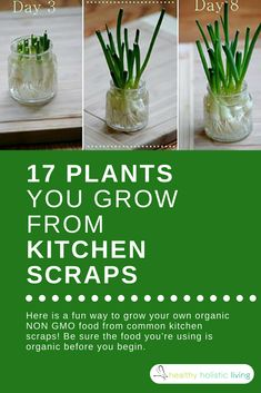 A great way to reduce waste and know exactly where your food is coming from! #gmofree #growyourownvegtables #kitchenscraps