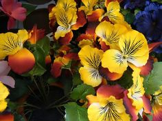 flowers for spring...