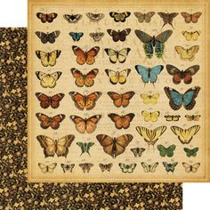"""""""Butterfly Specifics"""" from Olde Curiosity Shoppe! #newcollection #CHA #graphic45"""