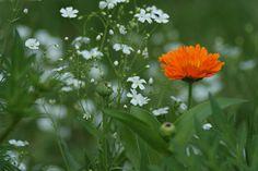 More flowers in my garden  057 by cubie271, via Flickr