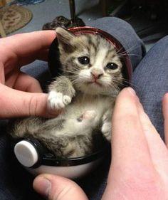 Pokemon ball kitty