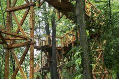 Mint a mókus fenn a fán. Új tanösvényt avattak a Somogy megyei Kaszón a Madarak és Fák Napja alkalmából, ráadásul nem is akárhol, hanem rögtön a fák lombkoronaszintjében.