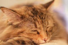Lovely cat ❤❤❤