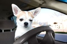 5 Helpful ways to ease your dog's car anxiety