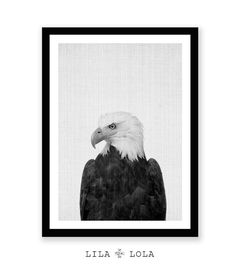 Eagle Print Hawk Photography Bird of Prey Animal Wall by LILAxLOLA
