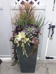 Firesticks and aeonium are featured in this nice vertical succulent arrangement … Firesticks and aeonium are featured in this nice vertical succulent arrangement by Simply Succulents Succulent Landscaping, Succulent Gardening, Succulent Pots, Cacti And Succulents, Planting Succulents, Garden Pots, Planting Flowers, Succulent Ideas, Vegetable Gardening