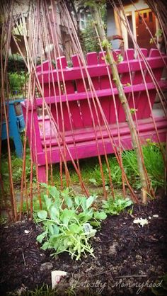 Garden Twig Fort for the kids. How-to.
