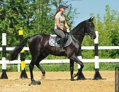Akhal-teke horses for sale - Angel-Nemo(Gulam - Adel)