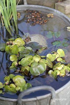 1000 images about bassin de jardin et plantes aquatiques. Black Bedroom Furniture Sets. Home Design Ideas