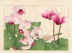 Tanigami Konan Western Flower Woodblock Prints