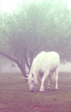⋆*¸.•*´♥ Once Upon A Time ♥´*•.¸*⋆ there lived a unicorn