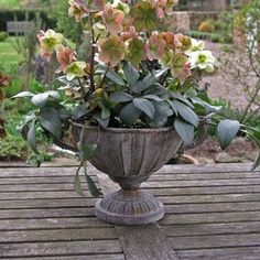 Aged Metal Planter — The Worm that Turned #rustic