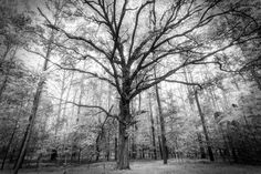 """""""God is the experience of looking at a tree and saying, """"Ah!"""" """" -   Joseph Campbell"""