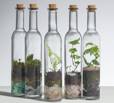 In that case what makes a terrarium sympathetic and attractive for indoor decoration? bulb, teapot, jar, a bottle could turn into a terrarium. Terrariums Diy, How To Make Terrariums, Succulent Terrarium, Bottles And Jars, Glass Bottles, Horticulture, Plant Species, Plantar, Growing Plants