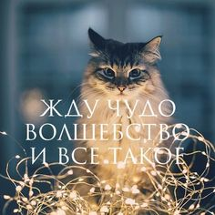 New Happy Pet Quotes Words Ideas Pet Quotes Cat, Animal Quotes, Rabbit Breeds, Pet Breeds, Russian Quotes, Winter Quotes, Hello Winter, Mr Wonderful, New Year Wishes