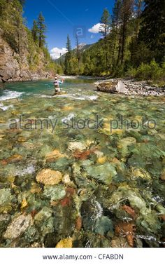 Fly-fishing on tributary of Elk River near Fernie, Elk Valley, East Kootenays, British Columbia, Canada. Stock Photo