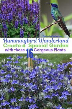 16 Perennials That Attract Hummingbirds to Your Garden!- 16 Perennials That Attract Hummingbirds to Your Garden! – Finding Sea Turtles 16 Perennials That Attract Hummingbirds to Your Garden! Hummingbird Flowers, Hummingbird Garden, Hummingbird Food, How To Attract Hummingbirds, How To Attract Birds, Flowers For Hummingbirds, Attracting Hummingbirds, Butterflies, Flowers Perennials