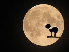 Free illustration: Moon, Cat, Mystical, Halloween - Free Image on ...