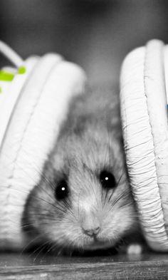 Cute hamster bear