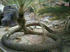 Funny Pictures of Nature to see Amazing, Crazy, Weird and Funny Nature Tree Images, Nature Images, Nature Pictures, Big Mac, Beard Growth Tips, International Yoga Day, Natural Line, India Tour, Picture Collection
