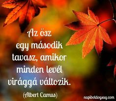 Ősz Motivational Quotes, Funny Quotes, Life Quotes, Inspirational Quotes, Word 2, Affirmation Quotes, Fall Pictures, Albert Camus, Einstein
