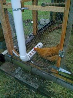 theartproject: PVC Pipe Chicken Feeder More