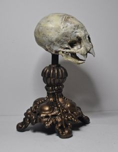 Nosferatu Fetal Skull Display