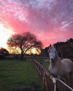 Horse and sunset Cute Horses, Pretty Horses, Horse Love, Beautiful Horses, Animals Beautiful, Cute Baby Animals, Animals And Pets, Cavalo Wallpaper, Foto Cowgirl