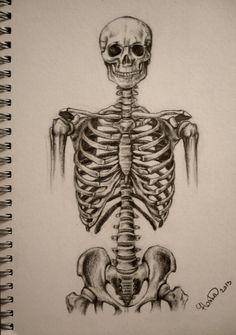 Skeleton torso by StupidestUsernameEve on deviantART
