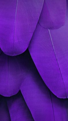 Purple feathers, Ultra Violet