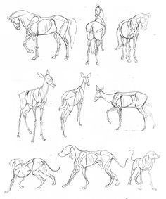 Drawing Anatomy Reference animal drawing references - How to draw animals : Visiting the zoo and dog farms are always fun for little children. Teach them to draw animals with these fantastic tips on how to draw animals. In this post you can learn animal Dog Anatomy, Anatomy Art, Anatomy Drawing, Manga Drawing, Animal Anatomy, Drawing Art, Animal Sketches, Animal Drawings, Art Drawings