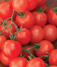 Tomato, Sweetie Organic.Deliciously sweet. Perfect for salads.