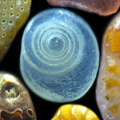 Gary Greenberg photographs the world, one grain of sand at a time, in A Grain of Sand: Nature's Secret Wonder