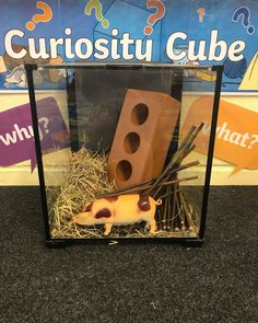 What's in the curiosity cube today! I wonder what our story is. What's in the curiosity cube today! I wonder what our story is. Play Based Learning, Learning Through Play, Early Learning, Traditional Tales, Traditional Stories, Curiosity Approach Eyfs, Early Years Practitioner, Curiosity Box, Creative Area