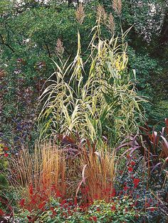 The Beauty of Ornamental Grasses Perennial Grasses, Ornamental Grasses, Perennials, Garden Grass, Garden Beds, Grass Species, Planting, Gardening, Types Of Grass