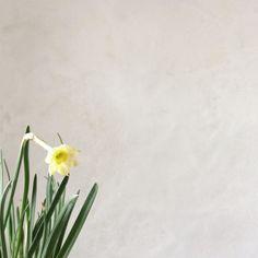 Narcissus Minnow. Here comes the sun...