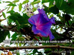http://www.marcelozamora.com/tema/el-amor-en-los-tiempos-de-twitter.html
