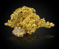 Gold on Quartz Mockingbird Mine, Colorado area, Whitlock District, Mother Lode Belt, Mariposa County, California, USA 13,0 x8,0x9,0cm …