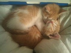 cute cat 22 Daily Awww: Fluffy kitty cats (31 photos)
