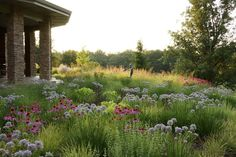 allium and echinacea w/calamintha and grass, by ADAM WOODRUFF + ASSOCIATES