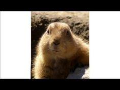 Marmotte Chiante - Répartie - Ep.01 Polar Bear, Animals, Animais, Animales, Animaux, Animal, Polar Bears, Dieren