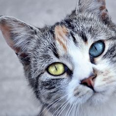 """""""Cats are perfect companions.  Independent and resourceful yet there when you need a cuddle."""" --Author Unknown"""
