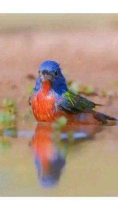 Beautiful Nature Scenes, Beautiful Birds, Snoopy Wallpaper, Cute Birds, Cardinals, Bunting, Cute Animals, Digital, Colorful Birds