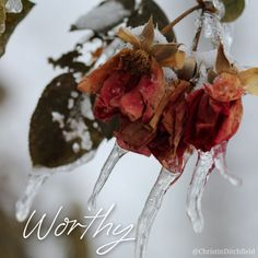 Worthy is the Lamb that was slain, and hath redeemed us to God by His blood, to receive power, and riches, and wisdom, and strength, and honour, and glory, and blessing. Blessing and honour, glory and power, be unto Him that sitteth upon the throne, and unto the Lamb, for ever and ever.  (Rev 5:12-14) ⠀ This is why we celebrate Advent and Christmas and Easter…  He is #worthy. ⠀ #AdventWord ⠀ [photo credit: Corey A. Ford]