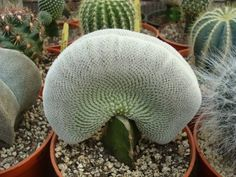 Plantas suculentas: un sinfín de formas y texturas