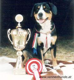 Erfolg Nr.100 Champion, Kitchen Appliances, Pictures, Entlebucher Mountain Dog, Photograph Album, Pet Dogs, Diy Kitchen Appliances, Home Appliances, Kitchen Gadgets