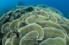 Hard Coral, Plants, Plant, Planets
