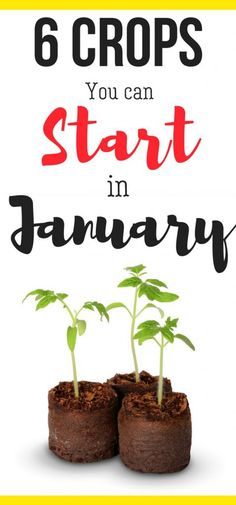 What can you grow in January? Here's vegetable gardening for beginners ideas and when to plant your seeds!!