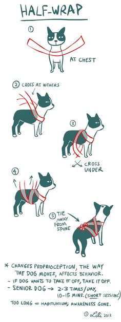 T Touch for dogs - alternative to thundershirt